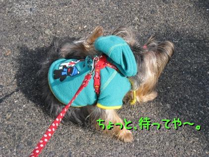 011_20090218174529.jpg