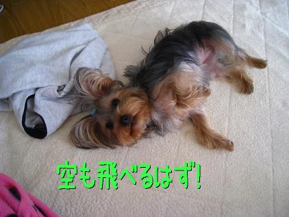 013_20090207200713.jpg