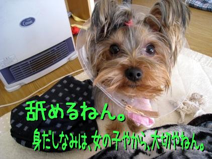 015_20090125162807.jpg
