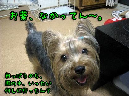 017_20090708104338.jpg