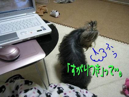 028_20090428195014.jpg