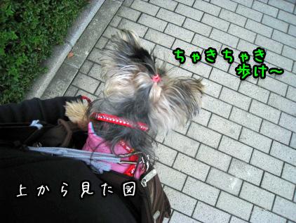 033_20081111143451.jpg