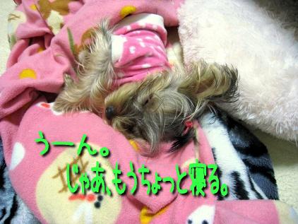 033_20081205204021.jpg