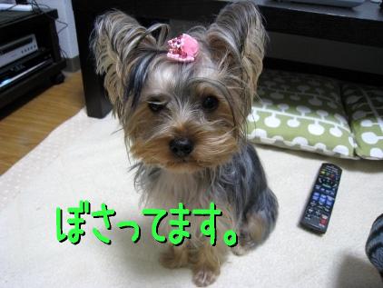 035_20090110204754.jpg