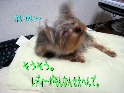 036_20090202194248.jpg