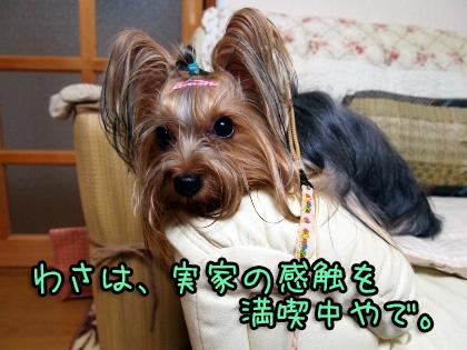 039_20090811225441.jpg