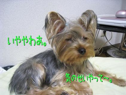 041_20090202194256.jpg