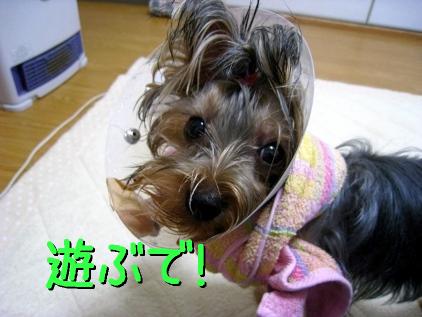 043_20090125162824.jpg