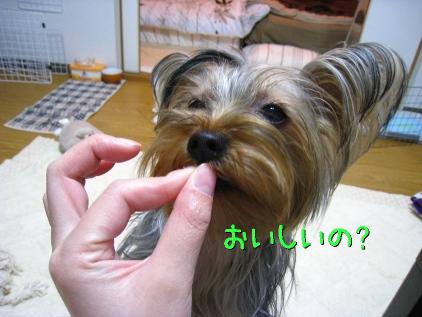 045_20090201212145.jpg