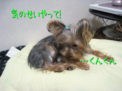 048_20090202194302.jpg