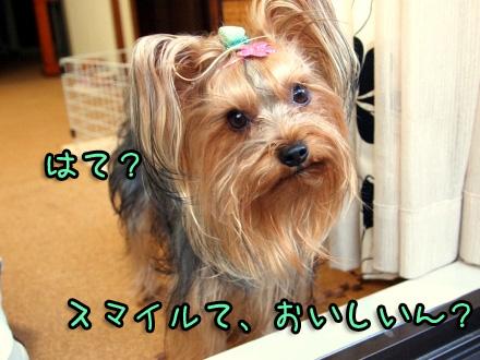 052_20091114200429.jpg