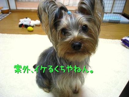 061_20090201212210.jpg