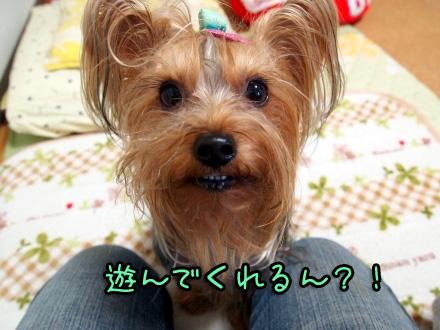 063_20091114200423.jpg