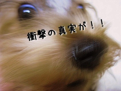 070_20081119114253.jpg
