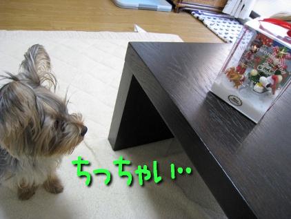 072_20081224192736.jpg