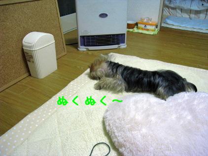 080_20081111143526.jpg