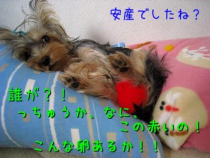 097_20081026185350.jpg