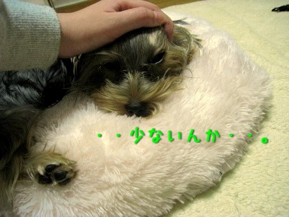 099_20081119114317.jpg