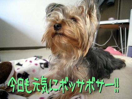 0_20090401174920.jpg