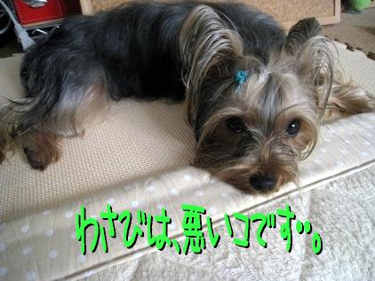 0_20090511160120.jpg