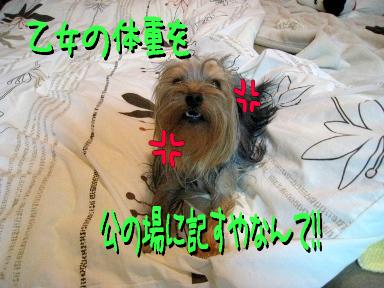 0_20090527091745.jpg
