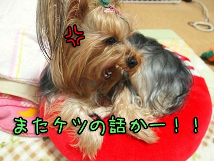 0_20091111190257.jpg