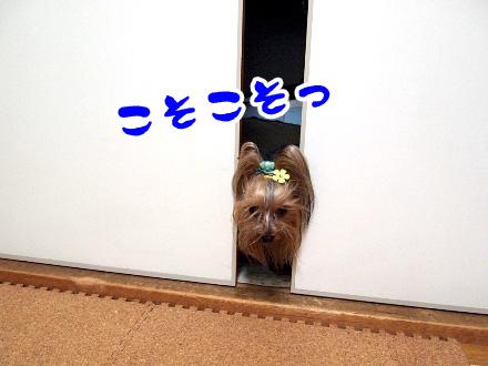 0_20091214174320.jpg