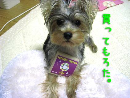 105_20081112192751.jpg