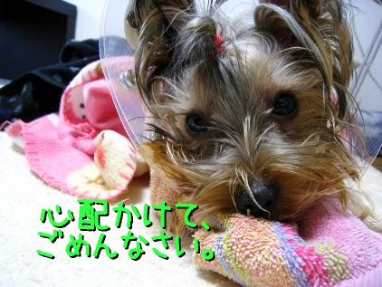 10_20090124191829.jpg