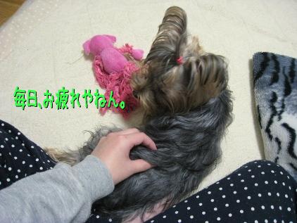10_20090131194856.jpg