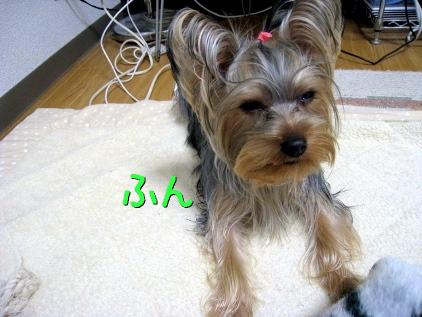 10_20090211141345.jpg