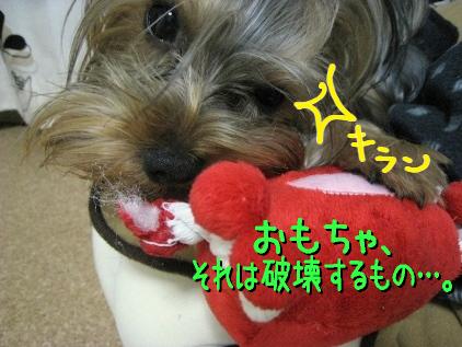 10_20090305183203.jpg