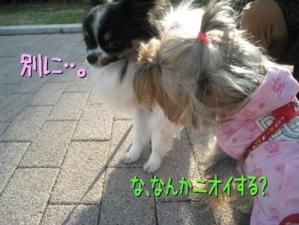 10_20090410214229.jpg