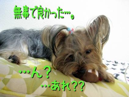 10_20090418165013.jpg