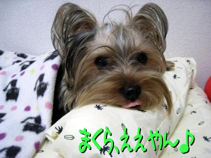 10_20090508200540.jpg