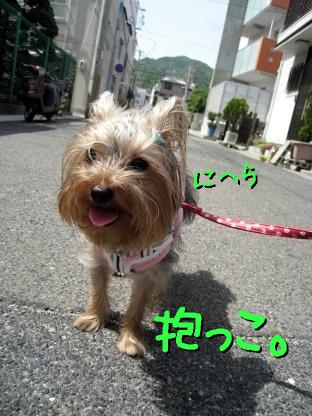 10_20090515190034.jpg