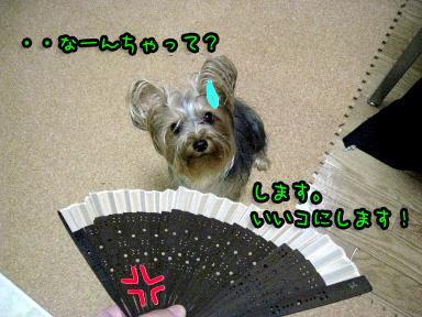 10_20090608192736.jpg