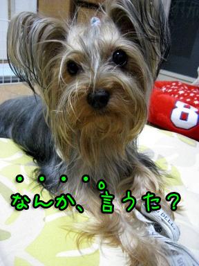 10_20090615185037.jpg