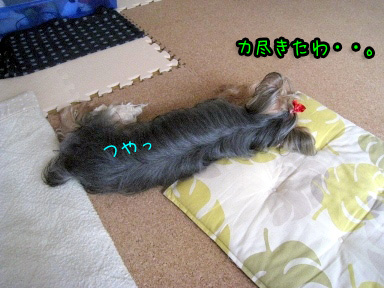 10_20090628122506.jpg
