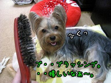 10_20090701170354.jpg