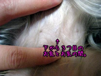10_20090731145438.jpg