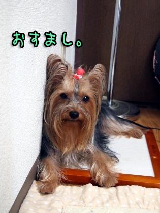 10_20090822194632.jpg
