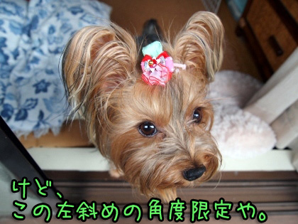 10_20090826142652.jpg