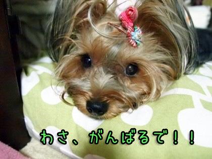10_20090918194647.jpg