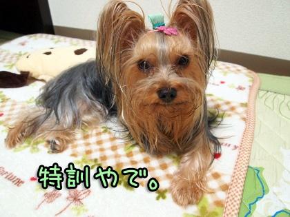10_20091028192746.jpg
