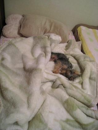 私だけ、狭い寝床生活が続いている・・