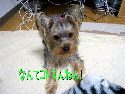 11_20090211141351.jpg