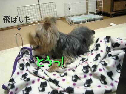 11_20090227204430.jpg