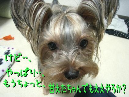 11_20090307212421.jpg
