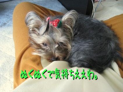 11_20090315155044.jpg